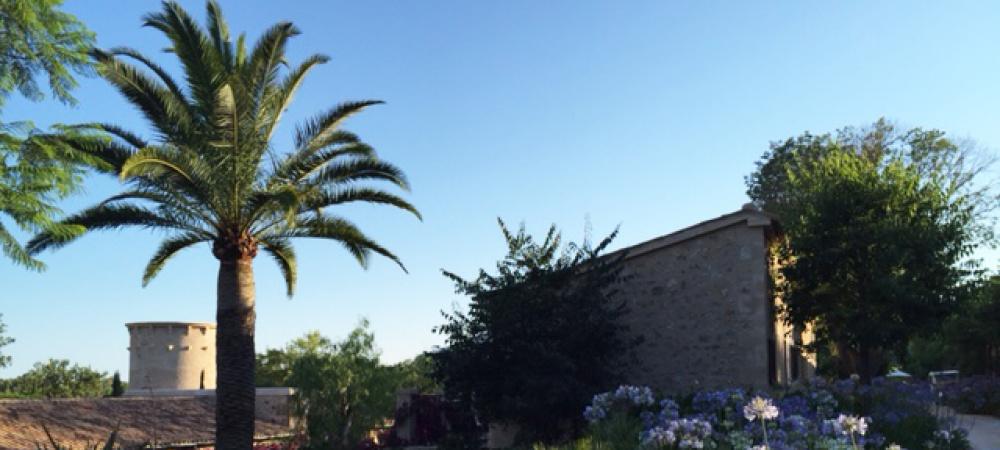 Mallorca: Palme