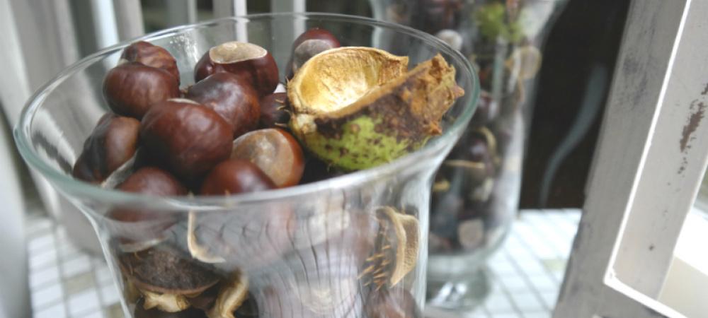 Vase mit Kastanien