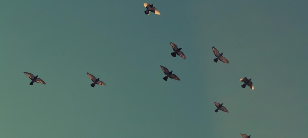 Vögel im Flug