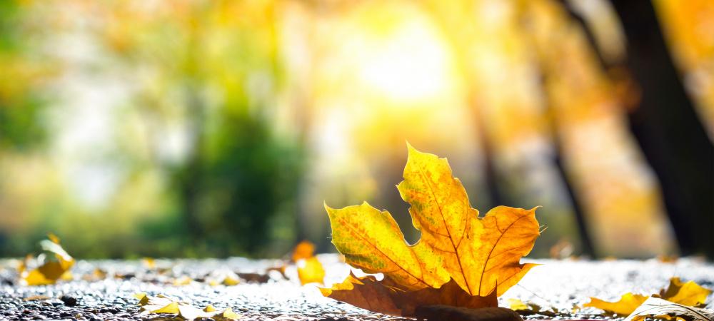 Mode, Beauty, Bücher im Herbst