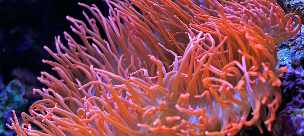 Pantone Farbe 2019: Living Coral