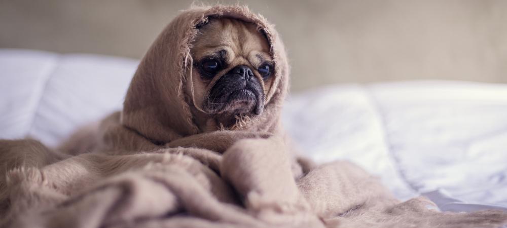 Bettwäschen-Typ