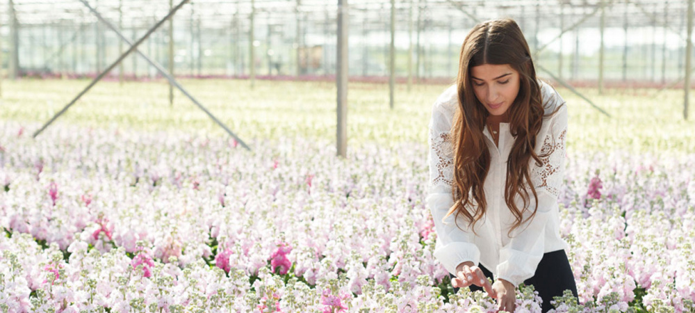 Rowan Blossom auf dem Blumenfeld