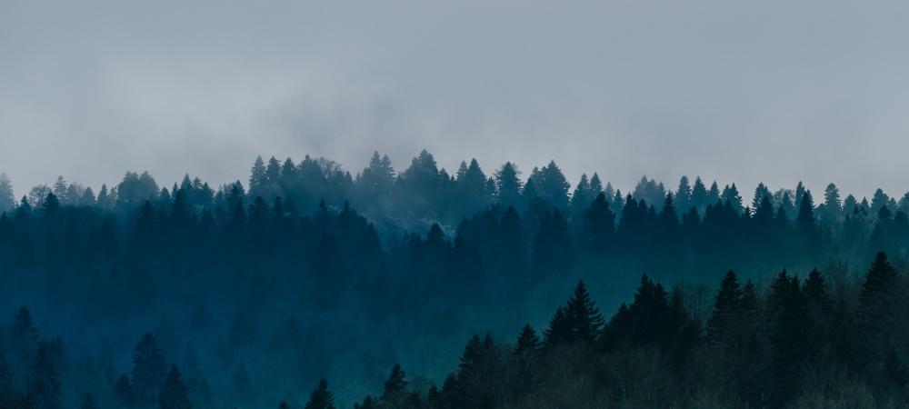 Ängste Wald