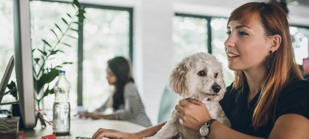 Hund im Büro: Mit diesen Tipps klappt es auf der Arbeit