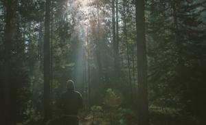 Prioritäten setzen - Wald