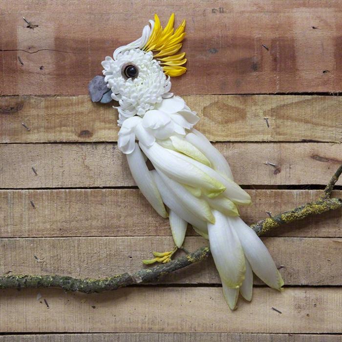 Blättertier: Kakadu