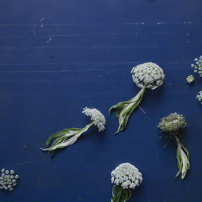 Blättertier: Qualle
