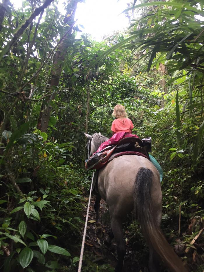 Kolumbien: Pferd
