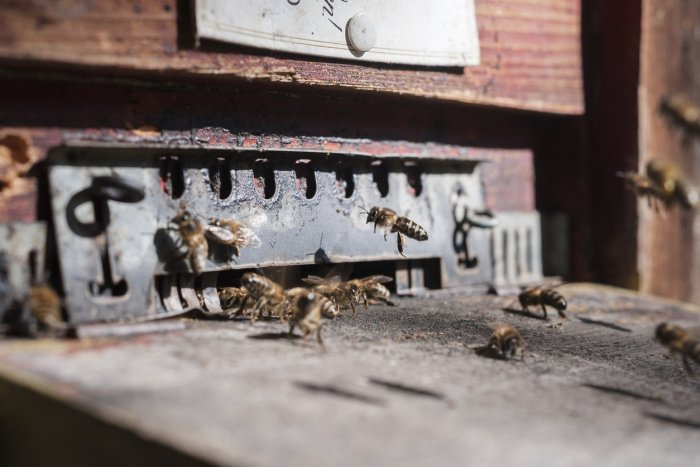 Bienenpatenschaft Weihnachten