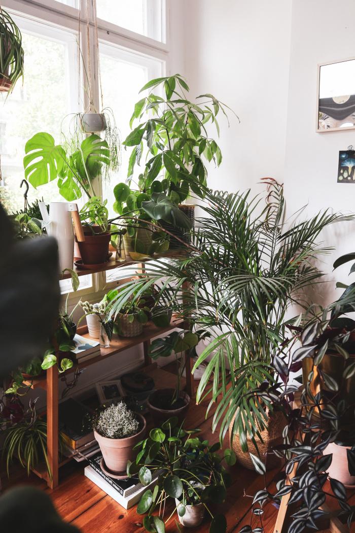 Urban Jungle – Pflanzen für dunkle Räume