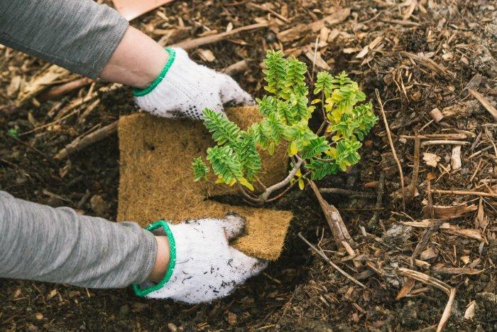 Wald der Hoffnung: Bäume pflanzen in Neuseeland