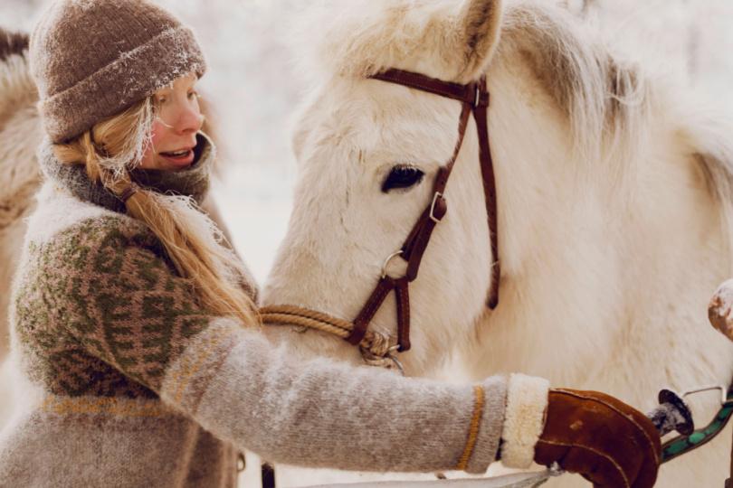 Pferd anschirren in Lappland