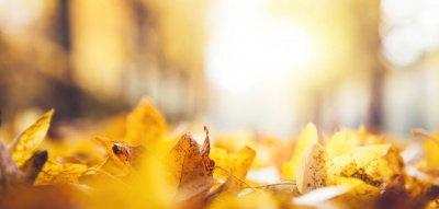 Vorfreude Herbst