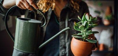 Frau gießt Zimmerpflanze