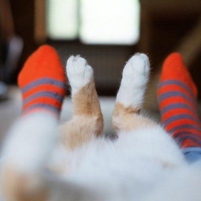 Kolumnist Michalis Pantelouris über Katzen und Liebe